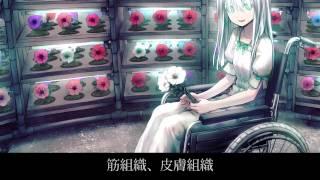 【初音ミク】Calla Soiled - 虚構の光【オリジナル曲】