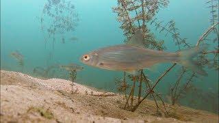 Зимняя Прикормка на Рыбалке 2018