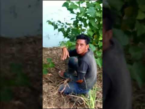 Arrest of Crocodiles in Krueng Peudada Aceh