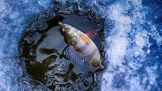 Нива. Мостик. Дичь. А также рыбалка на окуня по первому льду (подводная съёмка)