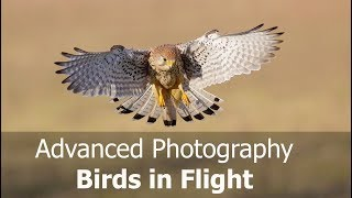 How to Photograph Birds in Flight: Advanced (Including Canon AF Case Settings)