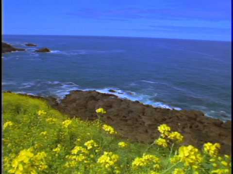 Oregon Coast  - Wild Flowers - Yellow Flowers - Pacific Ocean - Stock Footage