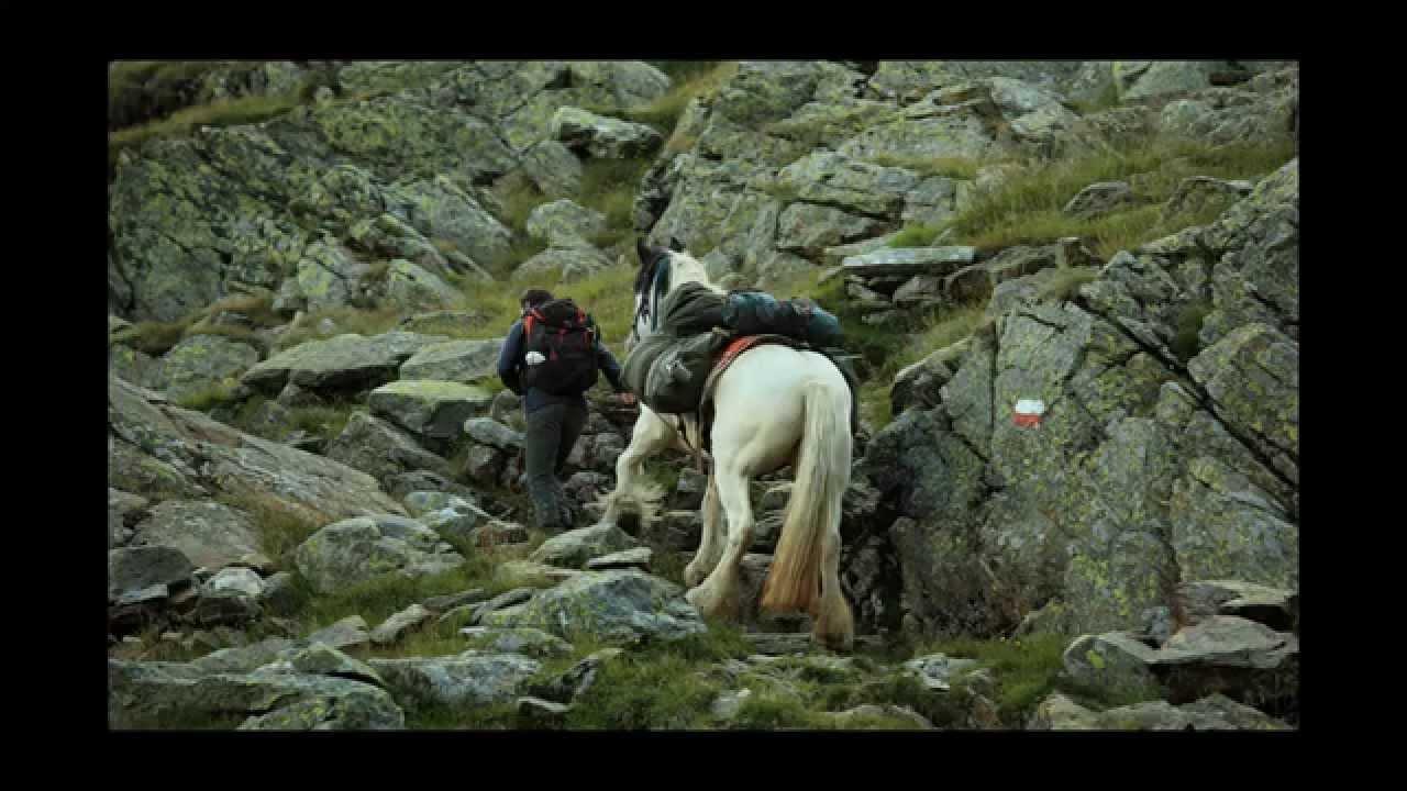 Alpenüberquerung Mit Pferd