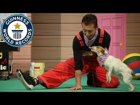 Most jumps over a moving human leg by a dog in thirty seconds – Guinness World Records