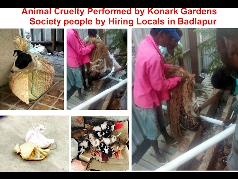 Animal Cruelty in Badlapur / Konark Garden Society/ Animal Brutality