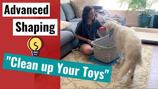 Brain Games - Teach Your Dog to Clean Up Toys