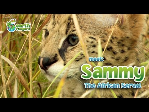 Meet Sammy the Serval and Earth Ranger Meghan