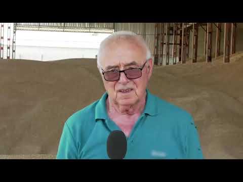 Жътва на пшеница с високи добиви    по технология на Тимак Агро  в Дибич