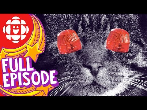 Holy Baloney | Why Do Cats Have Whiskers? | CBC Kids