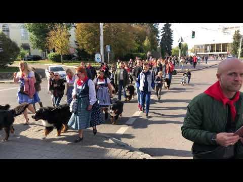 Волинські Новини: Парад зенненхундів у Луцьку. ІІ
