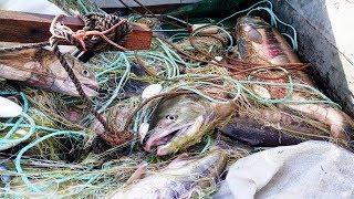 """Рыбалка сетями, Лов лосося """"Кеты"""" ,верховыми сплавными сетями"""