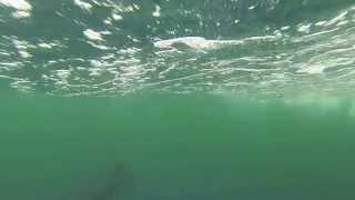 Blue Marlin at Thunderhorse