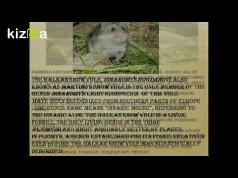 Kizoa Movie - Video - Slideshow Maker: Protected animals in Macedonia