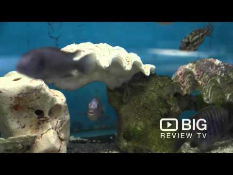 aquotix-aquariums-store-in-canning-vale-wa-selling-pet-fish-and-aquarium
