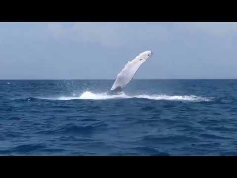 PANAMA - Las Ballenas de Las Perlas, Whales Watching Tour Contadora