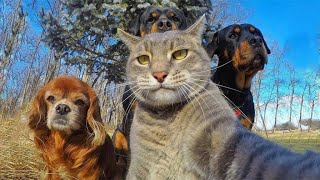 ПРИКОЛЫ С КОТАМИ Смешные Коты и не Только 2020 #2 cмотреть видео онлайн бесплатно в высоком качестве - HDVIDEO