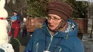 Новогодние ели съедят в Хабаровске