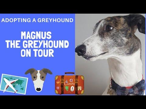 Adopting A Greyhound - Magnus on tour