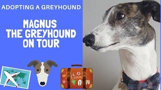 Greyhound in Scotland