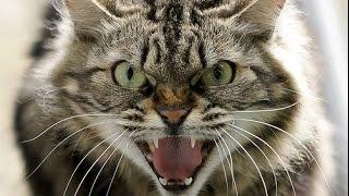 Кіт проти змії \ Кот против змеи