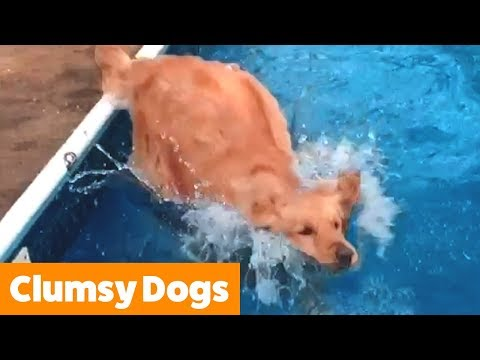Funniest Clumsy Dogs | Funny Pet Videos