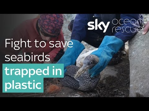 Ocean Rescue: Fight to save dozens of seabirds trapped in plastic