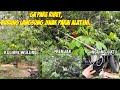 Mikat Burung Mengunakan Alat Pancing Piber Dapat Banyak Burung Kecil  Mp3 - Mp4 Download
