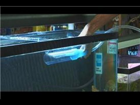 Saltwater fish tanks how to take care of a saltwater for How to take care of fish tank