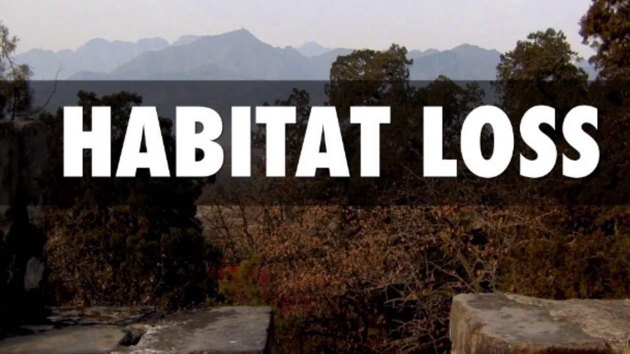 Habitat Loss Ecology Project :) - YouTube