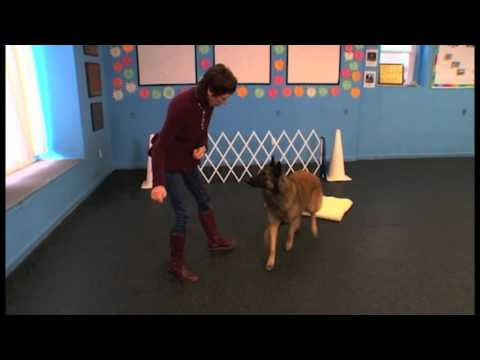 """how-to-teach-your-dog-the-""""go-to-place""""-command"""