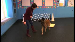"""How To Teach Your Dog The """"go To Place"""" Command"""