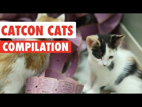 CatCon 2017 Tickets | Funny Cat Pet Video Compilation 2017