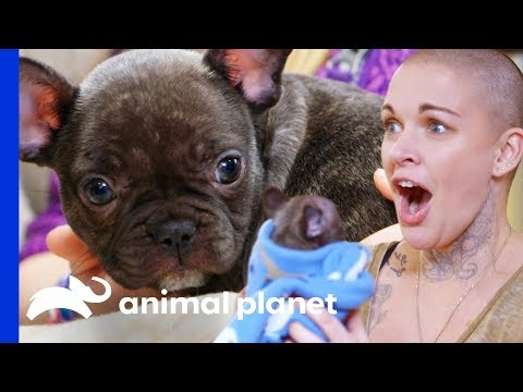 Amanda Finds The Perfect New Home For This Adorable Puppy | Amanda To The Rescue