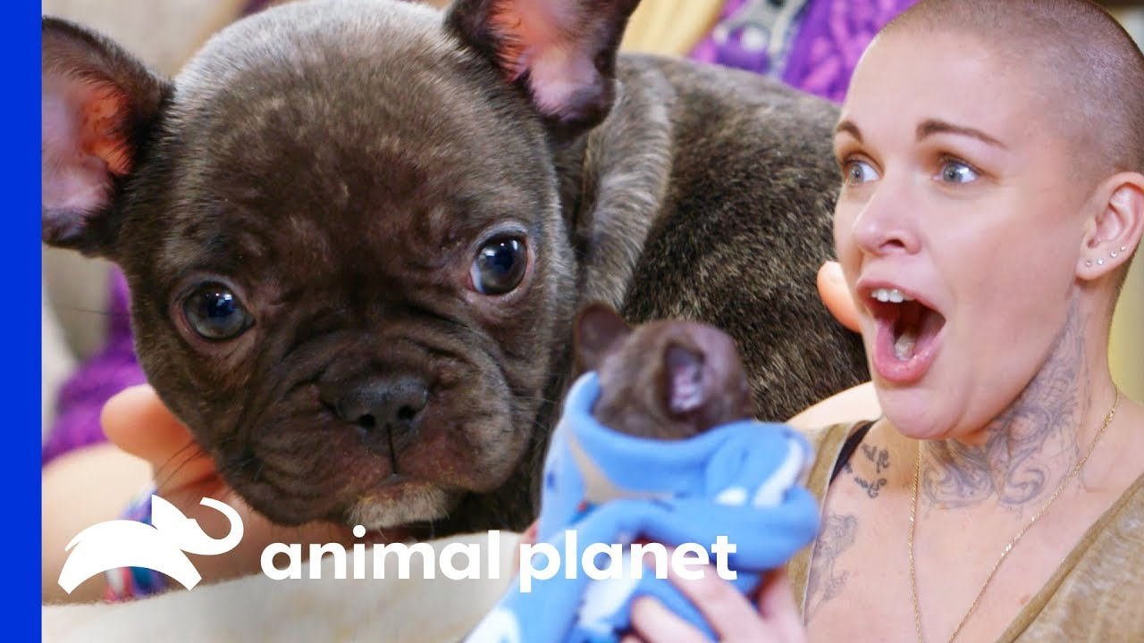 Amanda Finds The Perfect New Home For This Adorable Puppy Amanda