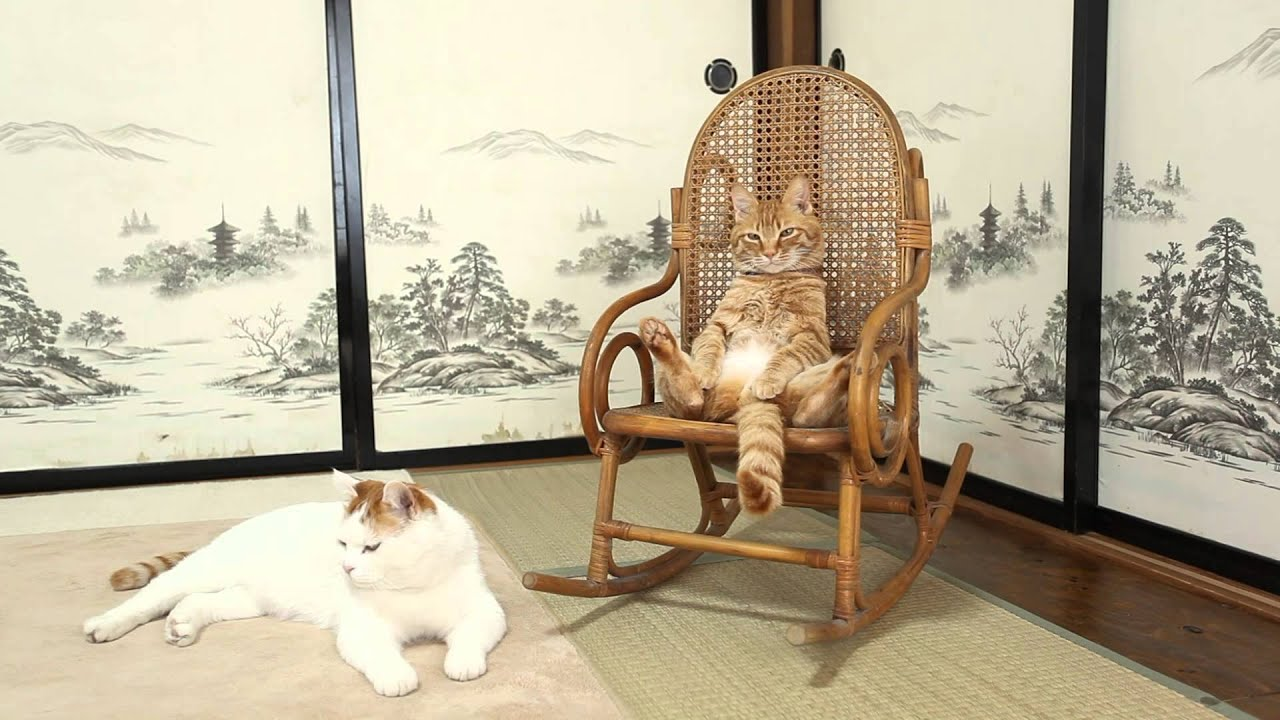 i need a chair gif gaming for ps3 かご猫 x 椅子に座る猫 cat sitting in 2014#3 - youtube