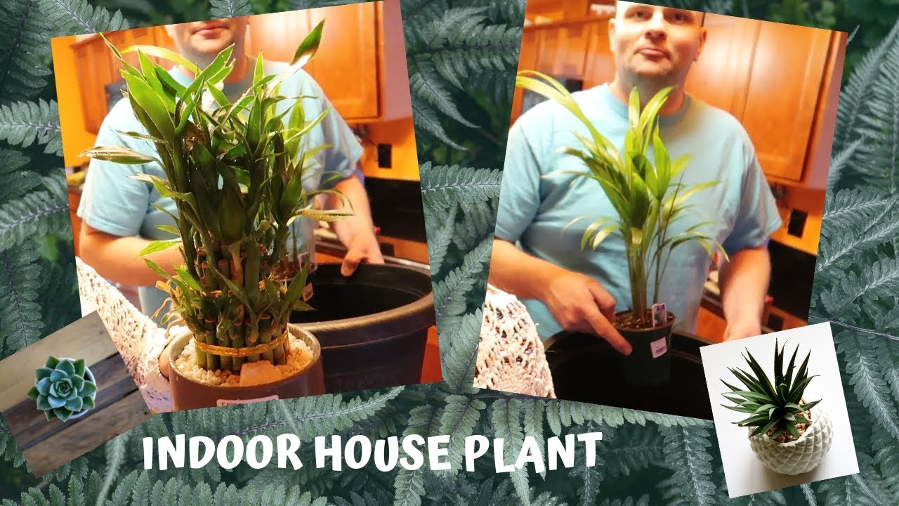 Indoor House Plants Where To Get New Addition Our Home