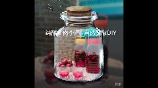 純釀紅肉李酒~自然發酵DIY