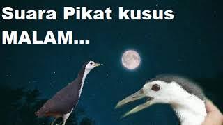 Download Mp3 Suara Pikat Ruak Kusus Malam Sangat Cepat. Bahaya Jika Di Play Sa'aat Siang.
