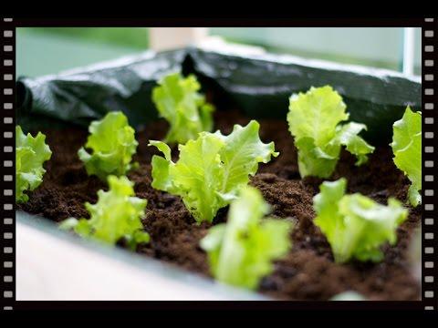 Salat Auf Dem Balkon Hochbeet Bepflanzen Youtube