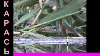 11-Поклевка КАРАСЯ на поплавочную удочку. Рыбалка. Ловля карася. Насадка- червь. Ловля на поплавок(Расширенный вариант видео
