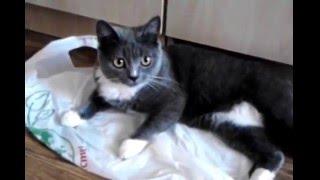 Если кошке что-нибудь мяукнешь - леща даст!