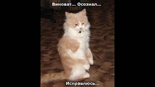 Веселые картинки Кошки смешные видео Коты смешные котики