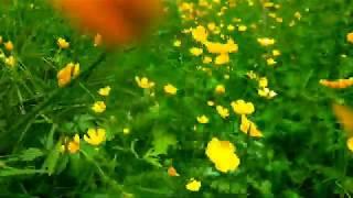 There is beauty in kasagbutan/damuhan! #summer2020 #greenynature #flowerblooms!
