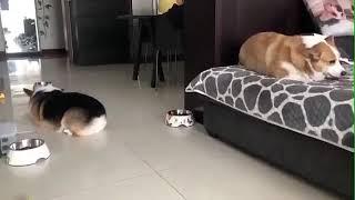 Cute n Funny Dog Fight