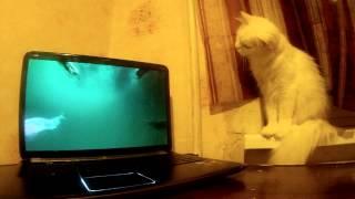 Рыбное кино для кошек