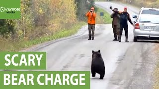 Aggressive bear charges spectators in Finland
