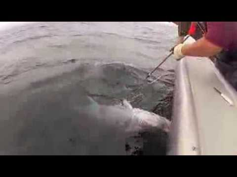 Deep Sea Fishing With Bluefin Tuna Charters In PEI - Tide And Time!