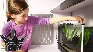 HER FIRST AQUARIUM - aquascaping and stocking thumbnail