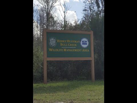 Hunting Bull Creek WMA round 2