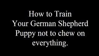 Teaching Your German Shepherd Not To Chew - Free Mini Course - Biting Visitors- Aggressive Behavior